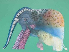 Elephant 2   36